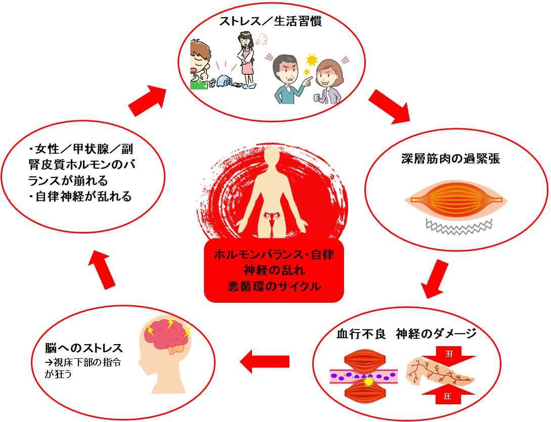 ホルモンバランスの乱れ悪循環サイクル